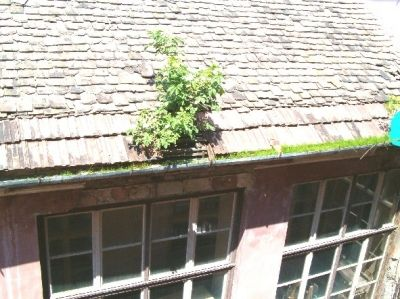 Régi iskola tető